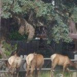 Super 8 Gardiner/Yellowstone Park Area Foto