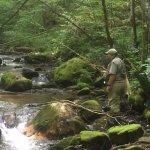Dry Fly fishing Moses Creek, Jackson County, NC
