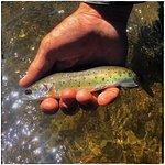 Foto de Tahoe Fly Fishing Outfitters