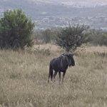 Foto de Pilanesberg National Park