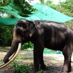 Elephant Park near to Na Muang Waterfall