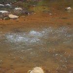 Photo de Environmental Interpretation Centre of Caldeira Velha