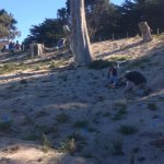 2014: Planting plants on the bald rocks near Eagles Point