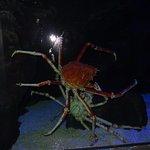 Photo de Underwater World Langkawi