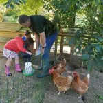 Helping farmer Tony collect the eggs & feed the chickens