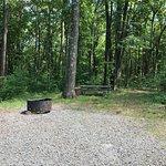Site Deerfield #213