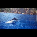 Photo of Alpana Excursions en Mer Day Tours