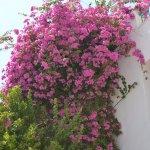 Photo of Sharm Cliff Resort