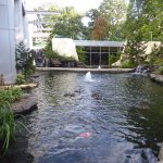 Fish Pond with Koi