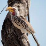 Local avi-fauna