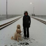 Rare winter whiteout, but the bridge is still a great place to walk.