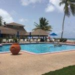 Gorgeous southern palms