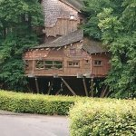 The Beautiful Tree House