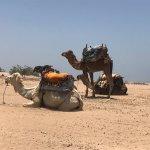 Ride a camel!