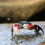 One of the many crabs that inhabit the tidepools across the street from the inn.