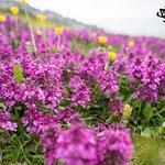 Farm Ville Natura AS Lukomir照片