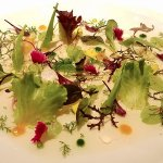 Vegetable leaves and petals salad, herbs, sprouts with lettuce cream and lobster
