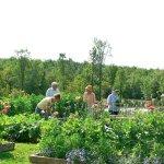 Informal garden tour