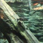 game fish tanks