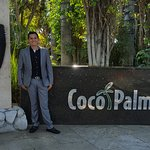 Photo of Coco Palm