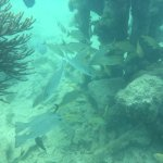 Abundant sea life among the coal dock wreckage