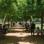 A tree lined path with tables and chairs provide shade and a place to eat