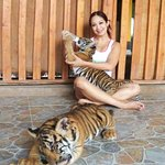 Tiger Feeding and other animals @ Safari Park