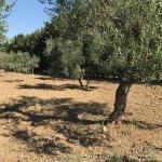 Classical Apulian landscape. Beautiful