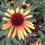 Allen Centennial Gardens Foto