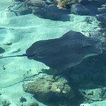 Photo of Lagoonarium