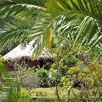Foto de Etnikas Ayahuasca Retreats