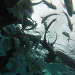 Photo de Portofino Beach Resort