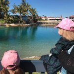 Children absolutely adore the dolphins.