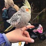 Photo de The Parrot Place
