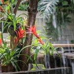 Tropische Pflanzen die gepflegt und gesund aussehen.