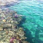 Domina Coral Bay Oasis Foto