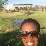 Visiting the African Velt with the Elephants