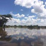 Lake with Hippos