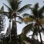 Photo de Solana Beach