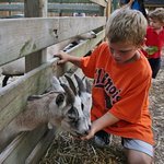 Meet our goats at the Petting Zoo!