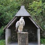 A majestic vulture