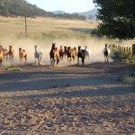 Photo de Rankin Ranch