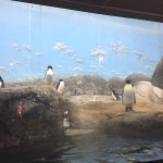 Foto de Riverbanks Zoo and Botanical Garden