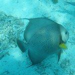 Photo de Seahorse Dive Shop