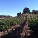 Our Estate Vineyard