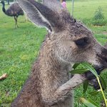 Got to fee the kangaroos!