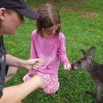 Feeding the kangaroos!