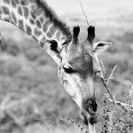 Photo of Tim Brown Tours - Durban Safari Tours