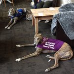 Greyhound lunch