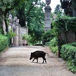 Foto de Parque del Laberinto de Horta